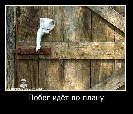 Демотиватор побег кот