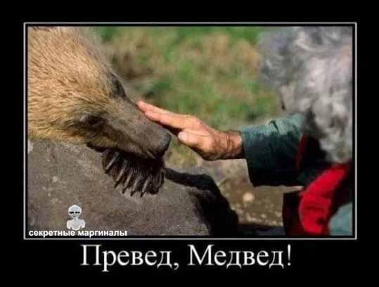 демотиватор медведи привед медвед