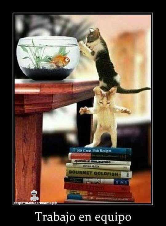 демотиваторы с котятами