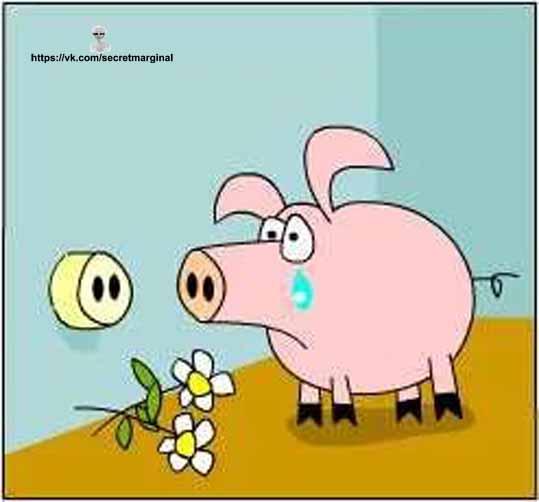 свинья  юмор