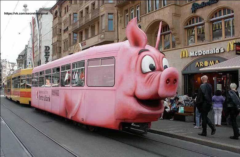 трамвай свинья