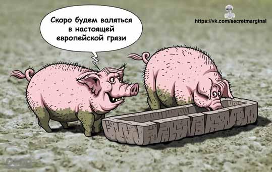 свиньи цеевропейцы