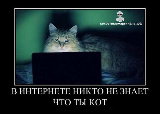 демотиватор кот и интернет