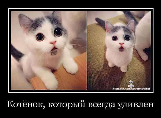 Новые демотиваторы про кошек