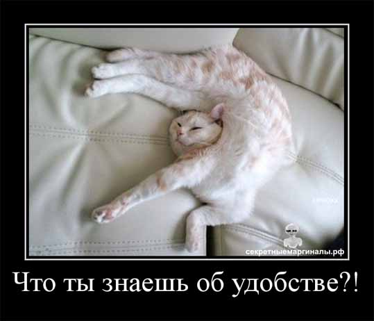демотиватор  кот удобство