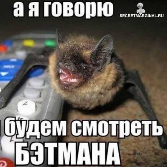 летучая мышь юмор