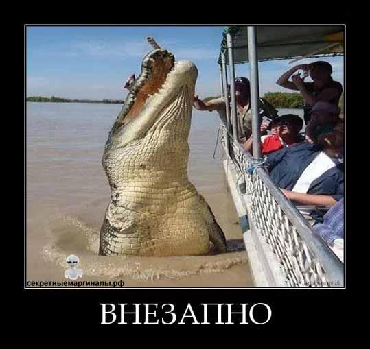 демотиваторы с крокодилами