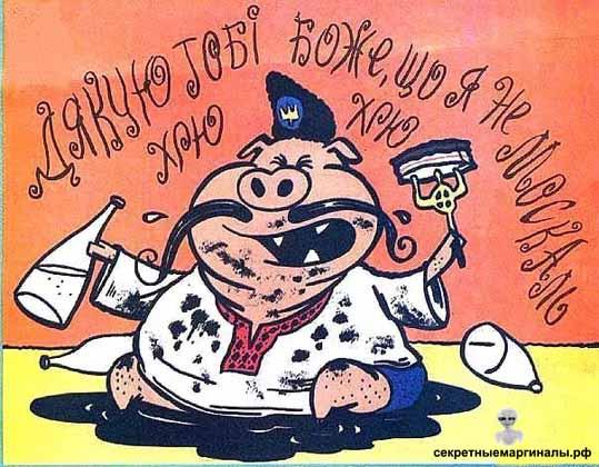 хохол свинья