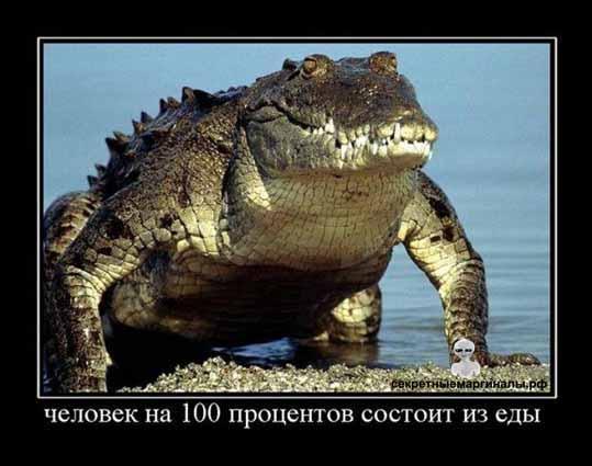 Демотиватор с крокодилами