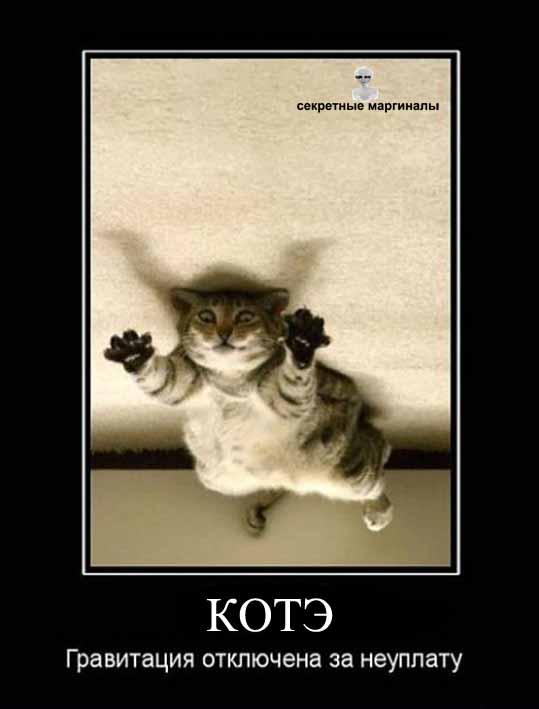 Демотиватор про кота и гравитацию