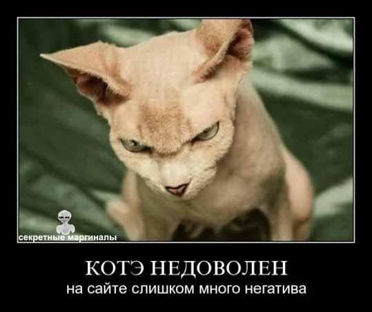 Демотиваторы с котами и кошками