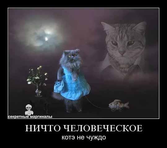 Демотиваторы с котэ