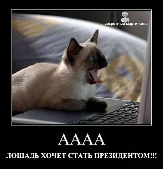 Демотваторы про Собчак и кошек