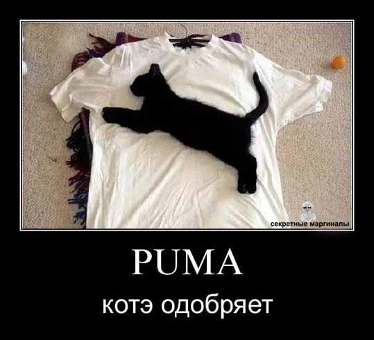 Puma демотиватор