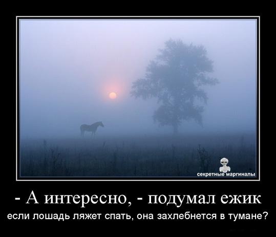 Ёжик в тумане и лошадка