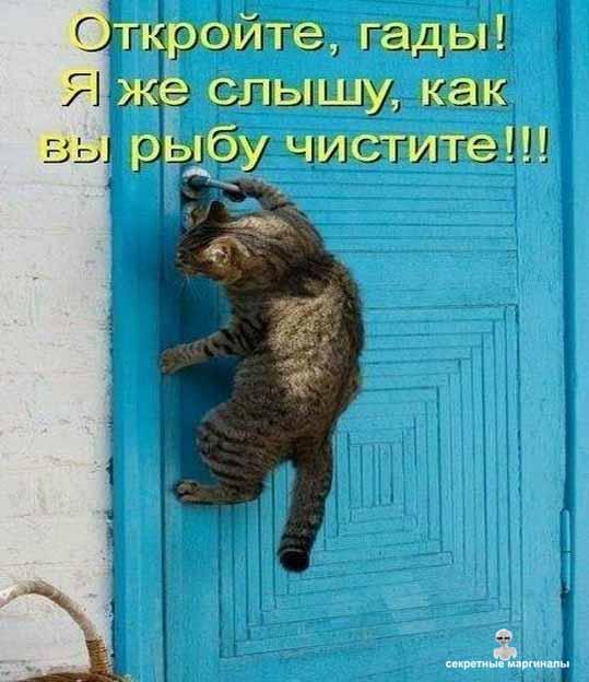 День игры с котятами