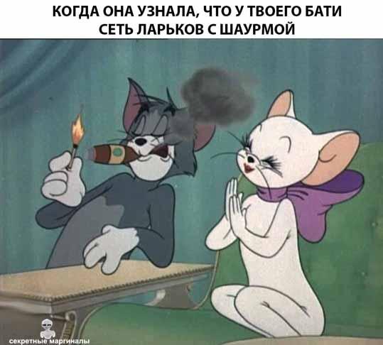 Кот и шаурма