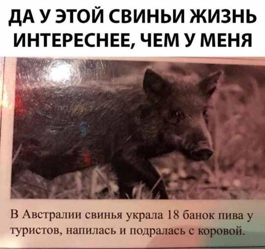 Жизнь свиньи