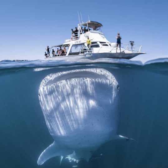 Катер и кит
