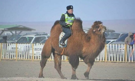 Гаишник на верблюде