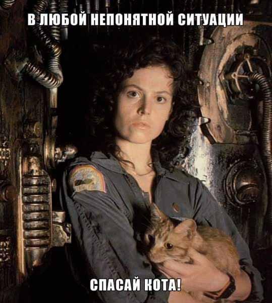 Спасай кота