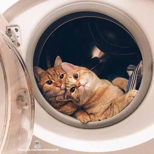 Коты в стиралке