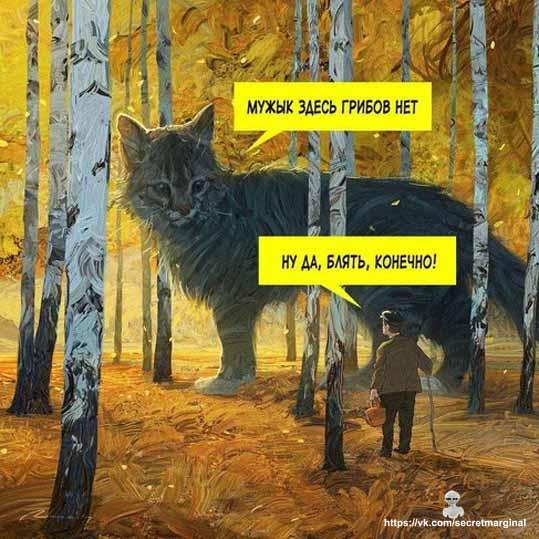 Грибов нет