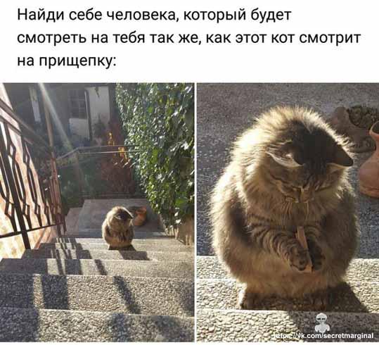 Как кот