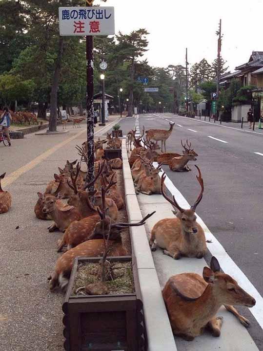 Все олени идут на хуй а штирлиц живт