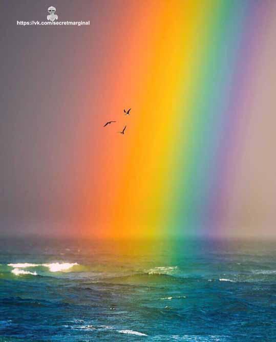 птицы и радуга