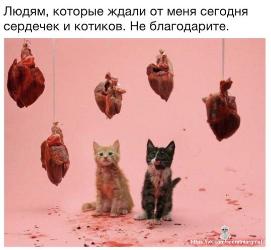 котики и сердечки