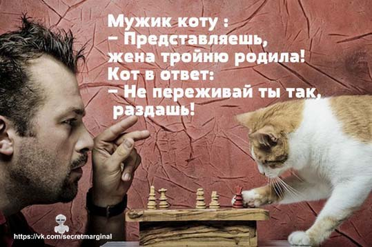 мужик коту