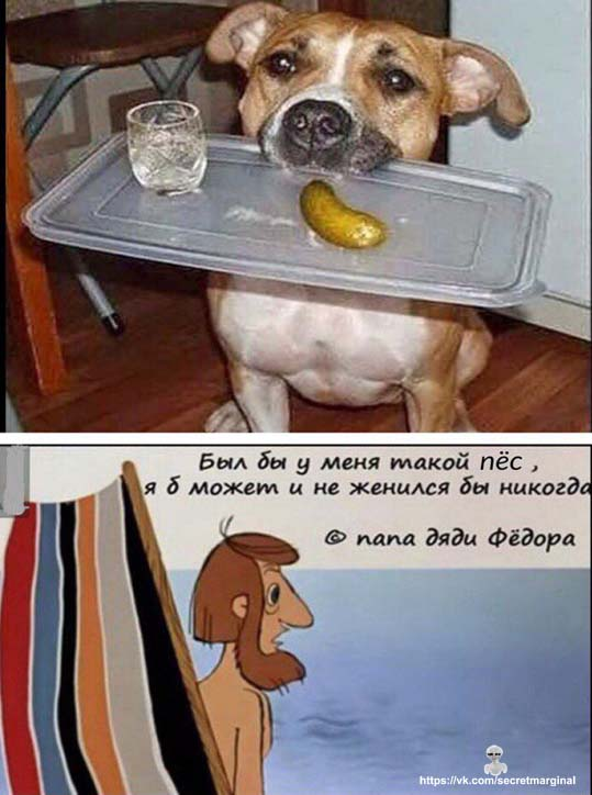 такой пес
