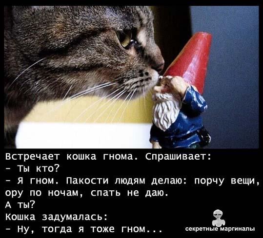 Кошка гном
