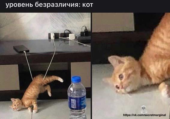 уровень кот