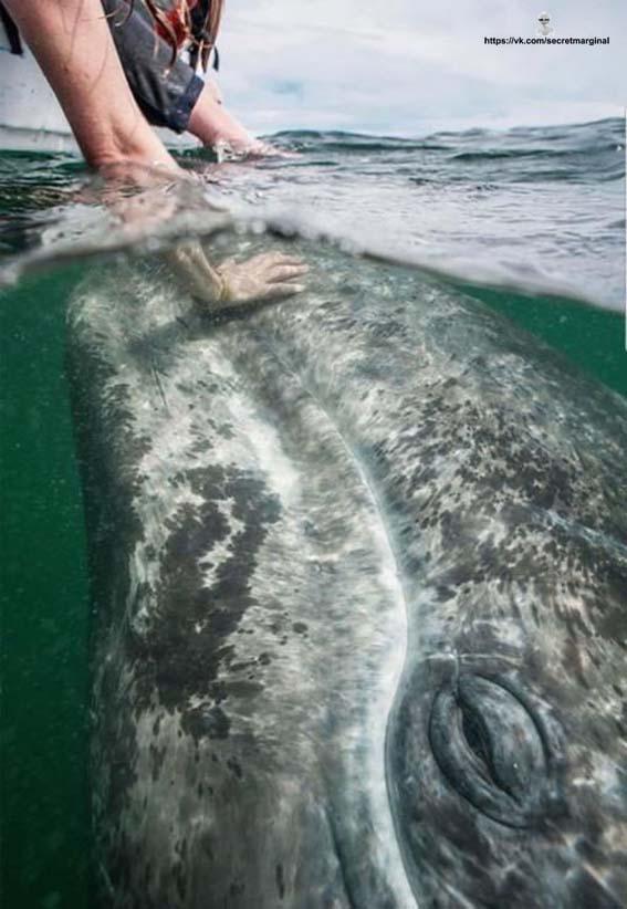 голова кита