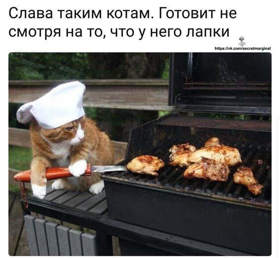 слава котам