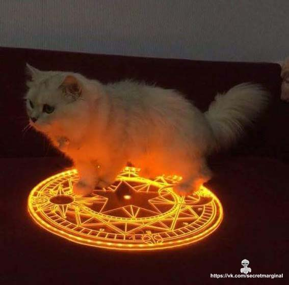 кот оккультист