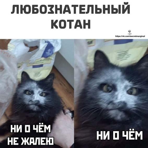 котан