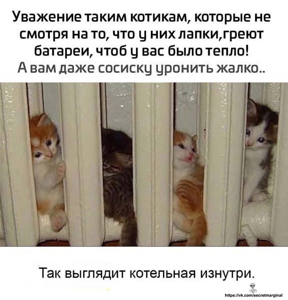 уважение котикам